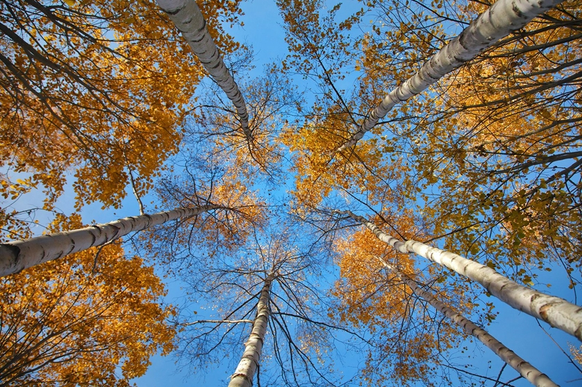 bigstock-In-The-Autumn-Forest-from-Bel-28241882.jpg